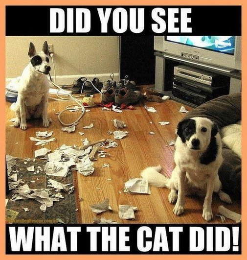It's always the cat...