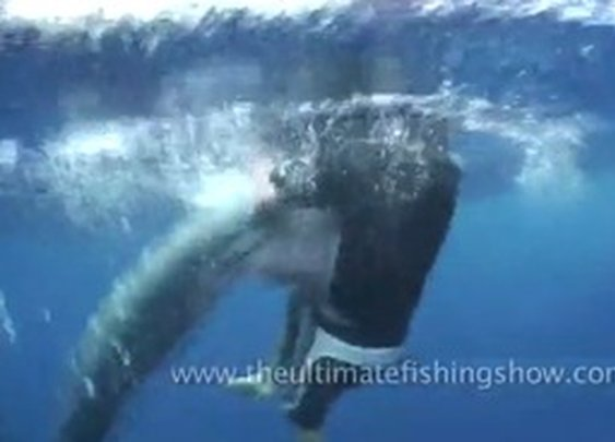 Dude Jumps Out of Helicopter, Tackles 800 Pound Marlin