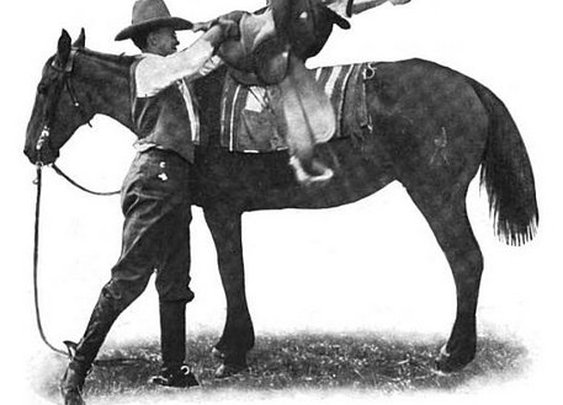 Saddle Up! How to Bridle and Saddle a Horse | The Art of Manliness