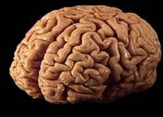 Why living in the moment is impossible: Study finds decision-making memories stored in mysterious brain area | .:: FreeQ's Blog ::.