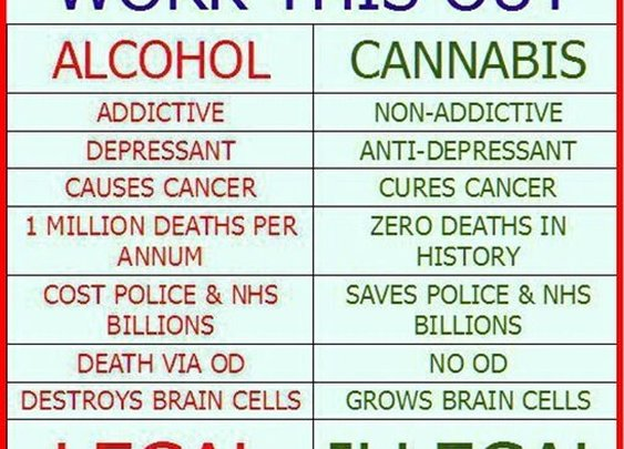 Alcohol v Cannabis