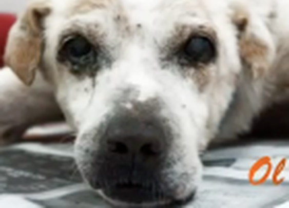 Lonely Old Dog Has His Final Wish Fulfilled | Life With Dogs