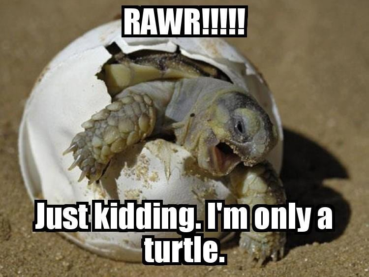 Just kidding, I'm only a turtle.