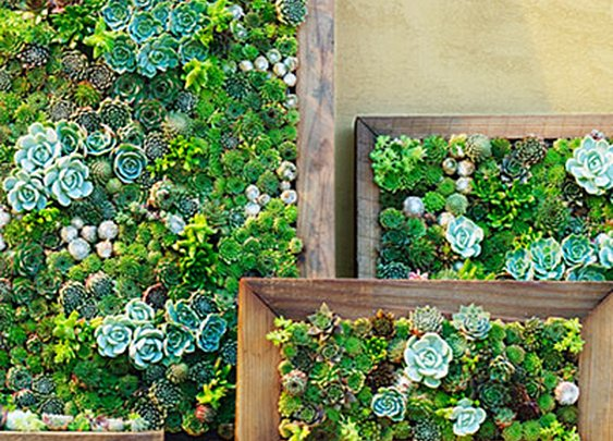 How to make your own vertical succulent garden