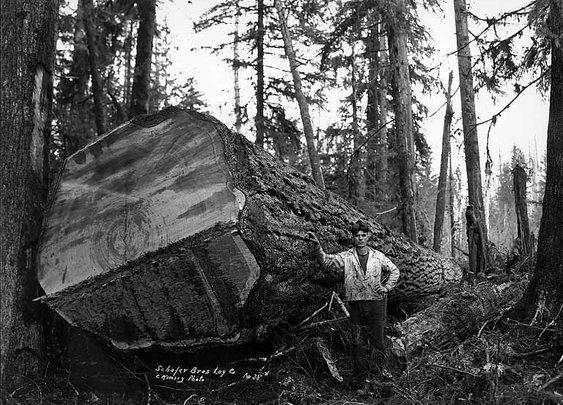 Couper des gros arbres | La boite verte