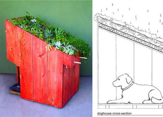 Sustainable Dog House