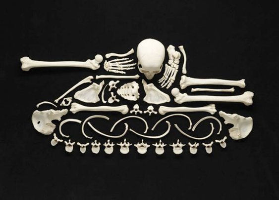 The Creepy Art of Human Bones