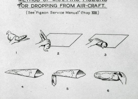 Dropping Pigeons from Aircraft