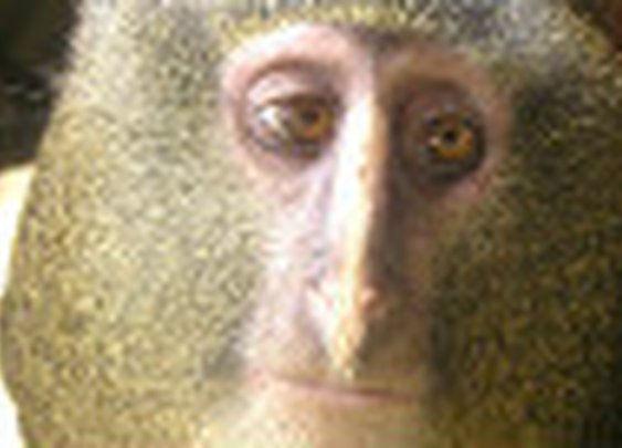 New monkey discovered - CNN.com
