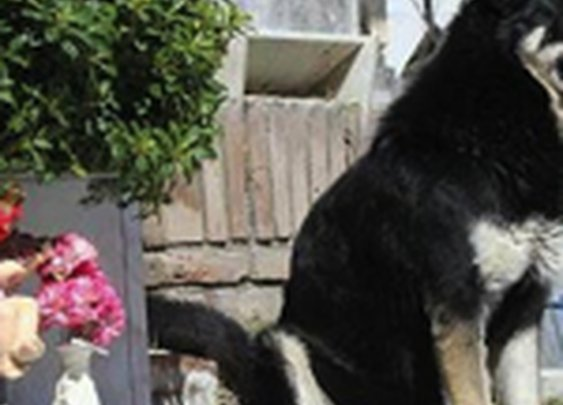 Dog stands guard over deceased owner's grave for six years | The Sideshow - Yahoo! News