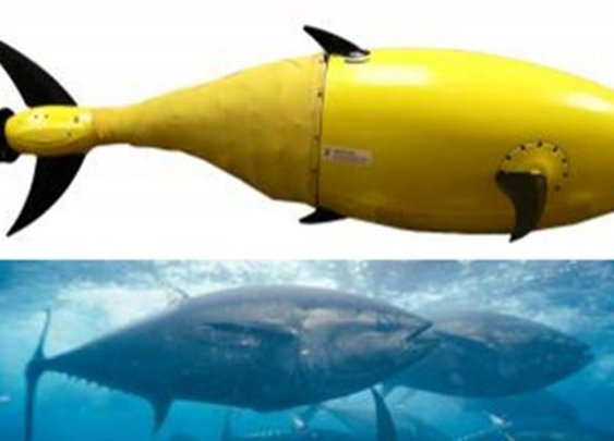 BIOSwimmer robot mimics the humble tuna fish