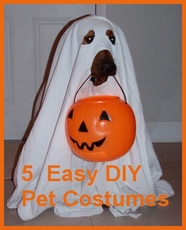 5 Easy DIY Pet Costumes You Could Create In Your Sleep