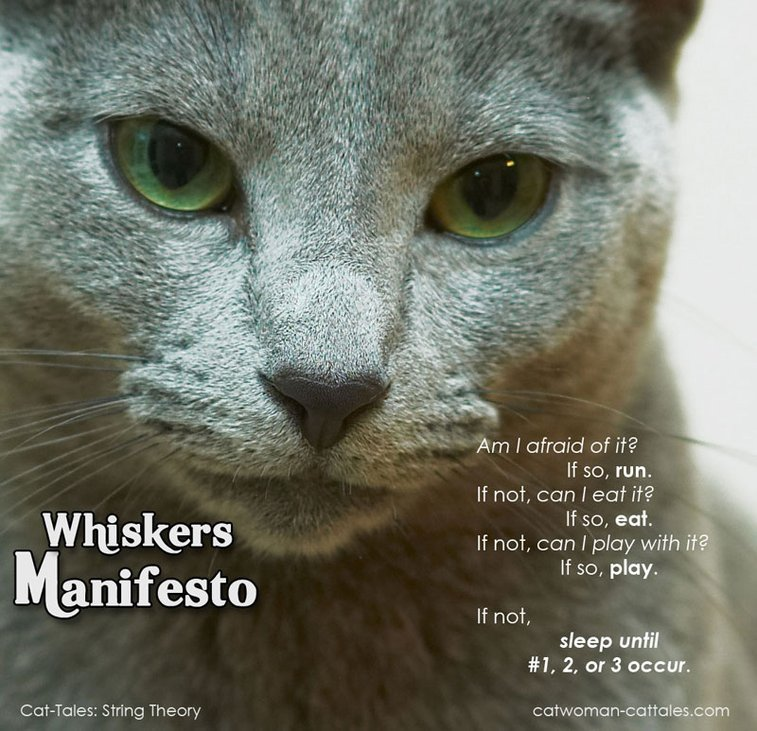 Whiskers Manifesto