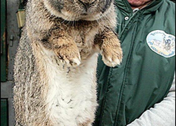 Thats a big ass bunny!