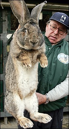 Thats a big ass bunny!
