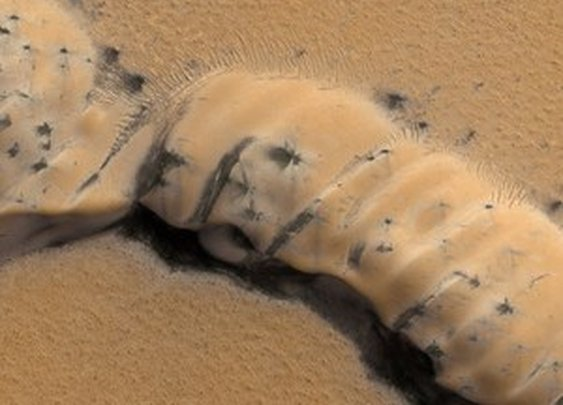 Are Those Spidery Black Things On Mars Dangerous? (Maybe) : Krulwich Wonders... : NPR