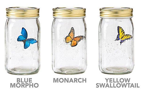 Electronic Butterfly In A Jar