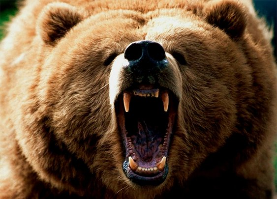 Huckberry | Man Kills Grizzly With Hands and Teeth