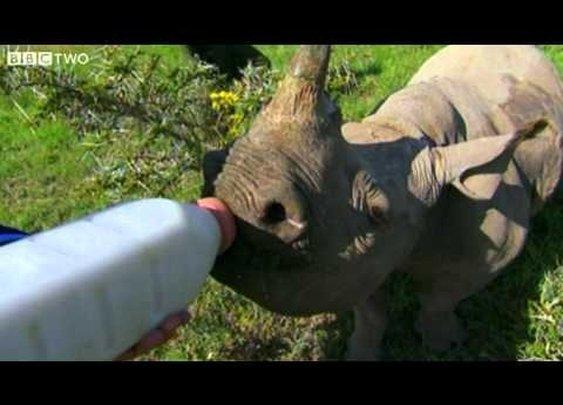 Stephen Fry Bottle Feeds Baby Rhino