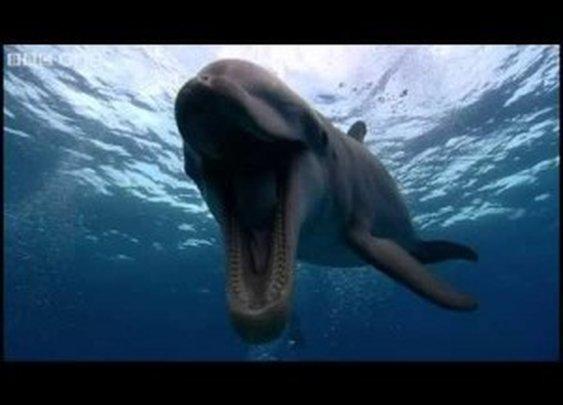 Farting Dolphin – Funny Talking Animals