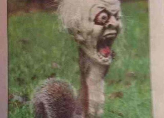 A squirrel got it's head stuck in a halloween decoration and terrified a neighborhood