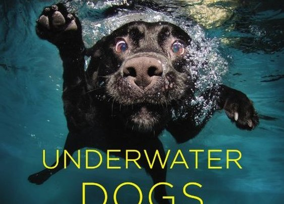 Photographs of Underwater Dogs