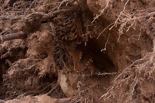 Human Skeleton Discovered in Roots of Tree Felled by Hurricane Sandy