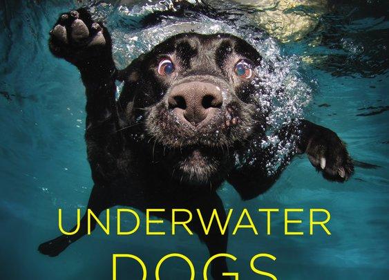 Seth Casteel's Underwater Dogs | OutsideOnline.com