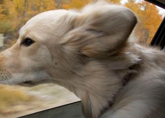 4 Reasons For Your Dog's Bizarre Behavior