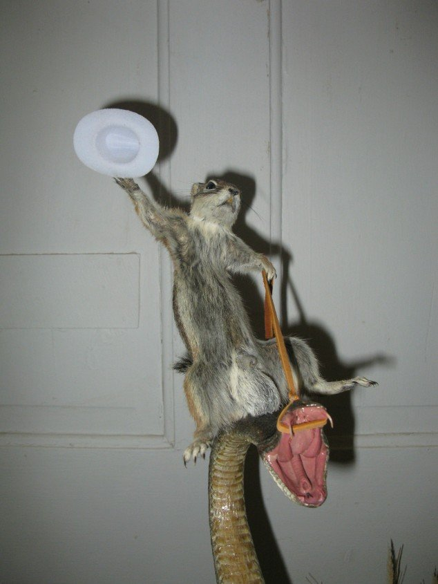 Squirrel riding a rattlesnake