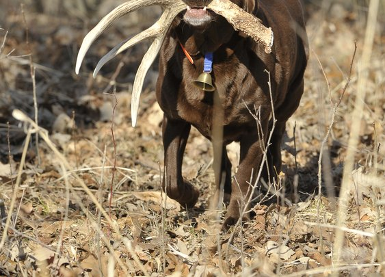 Teach Your Dog To Find Sheds