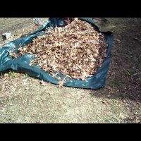 Rake Leaves Onto a Tarp for a Speedy Fall Cleanup