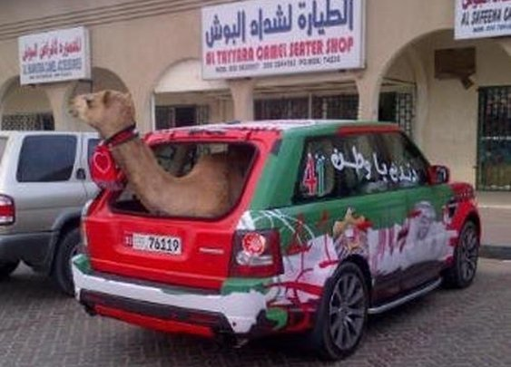 Meanwhile in UAE.. #HappyNationalDayUAE #UAE41