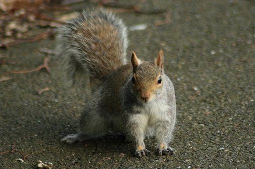 Squirrels Teach Robots To Lie, Nobody Questions Whether That's A Good Idea