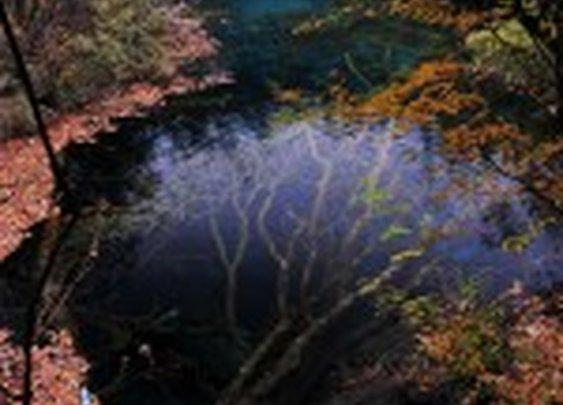 An Underwater Tree in Jiuzhaigou Valley | Colossal