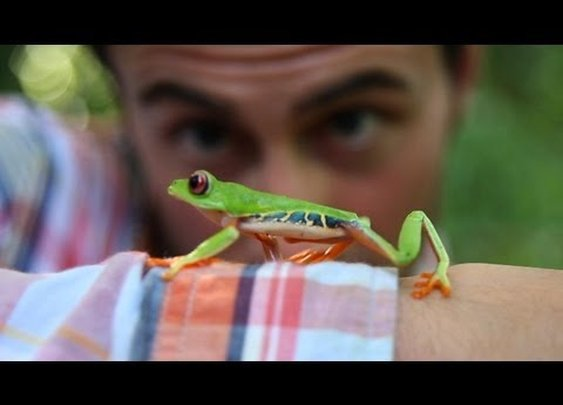 Follow The Frog by Rainforest Alliance