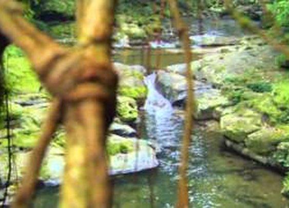 Meghalaya's  Living Bridges - Incredible India - YouTube