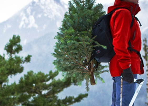 """Google: """"national forest christmas tree"""""""