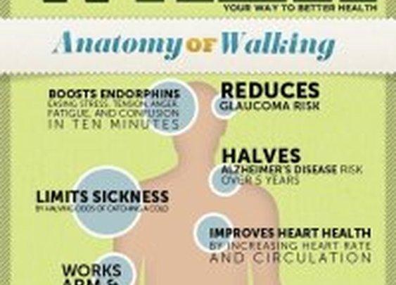 Anatomy and Benefits of a Walk | WellEvolvEdU