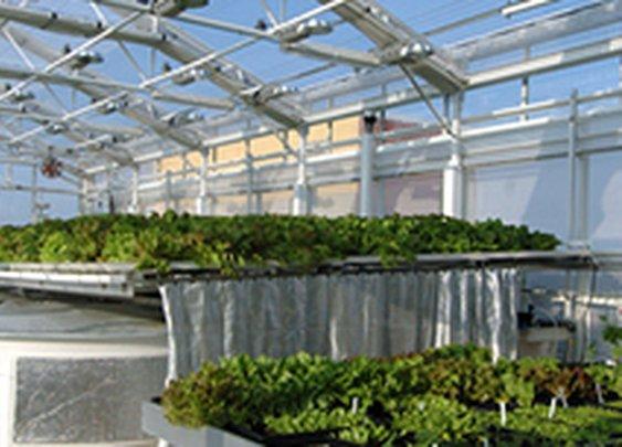 Green Sky Growers -- Winter Garden, Florida