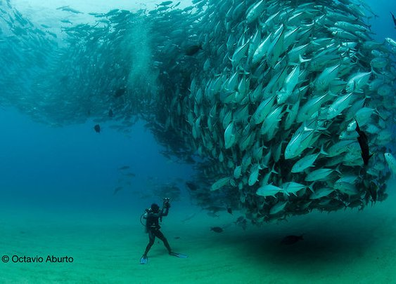 Fish Tornado!!!!  Mind = BLOWN!