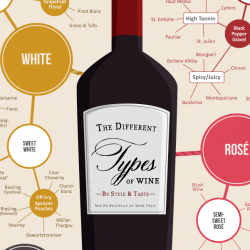 The Different Types of Wine