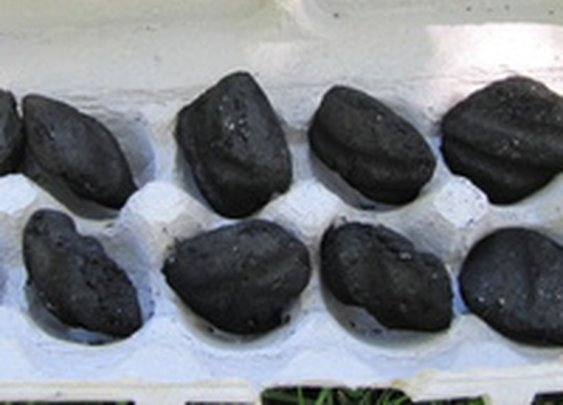 Ignite an Egg Carton with Charcoal Inside for an Easy Start