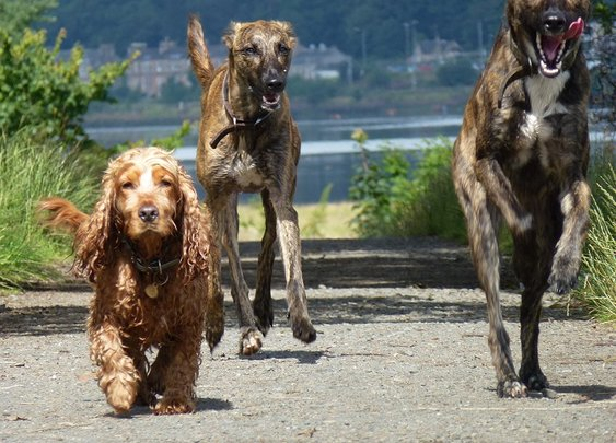 Dog walking at Erskine beach with Jay and the gang!