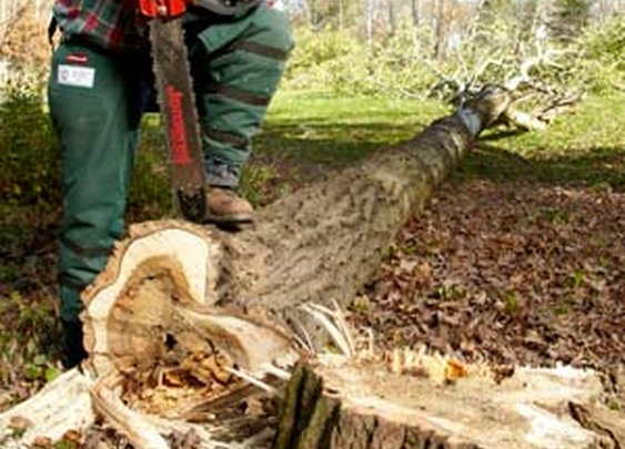 10 Tips for Using a Chain Saw - DIY Advice Blog - Family Handyman DIY Community
