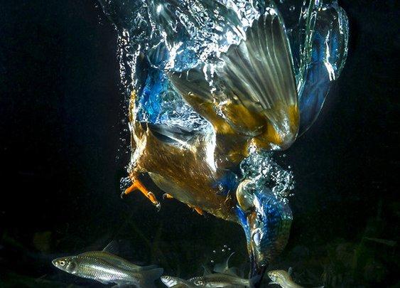 The blue fisherman by Koen Cuppens   Earth Shots