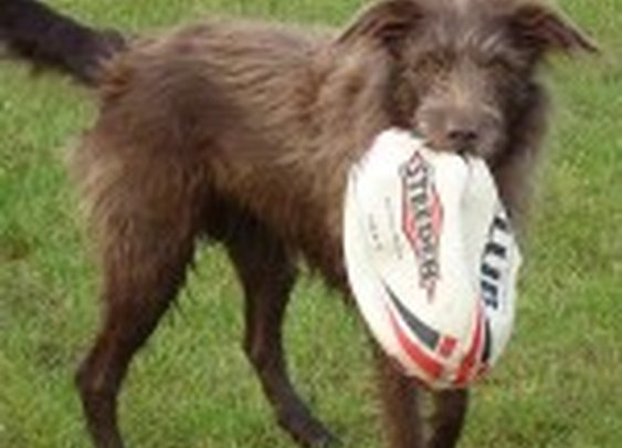 Dog with rugby ball