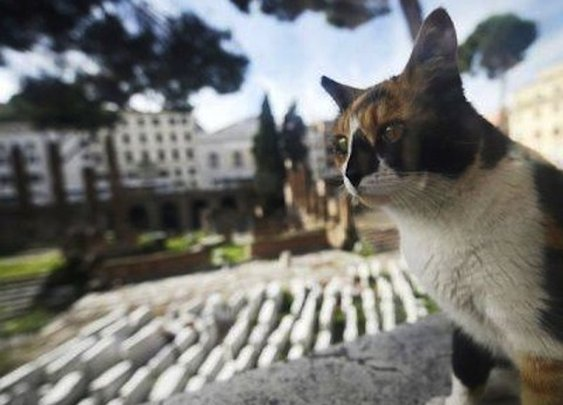 Italian cat brings gifts to his late master's tomb | The Raw Story