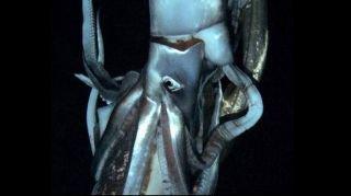 'Kraken' caught on film at last | Fox News