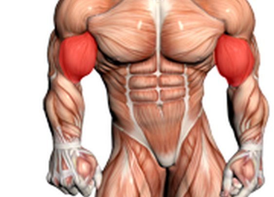 The Top Exercises That Will Get You Jacked ~ The Good Guys Corner